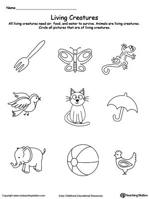 early childhood plants  animals worksheets