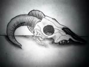 Ram Skull Side View Drawings