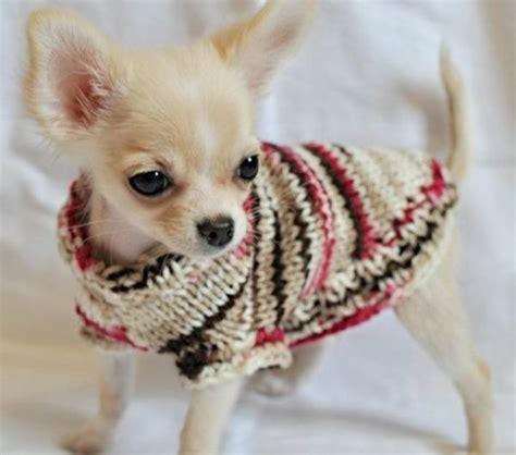 hundepullover selber stricken hundepullover selber stricken oder aus einem alten pulli
