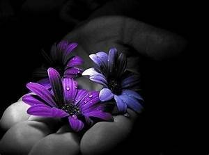 purple flowers,,,color splash,,, | Black and white with ...
