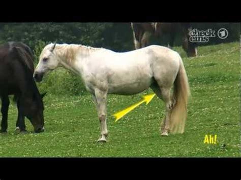 süße pferde bilder wie k 246 nnen pferde im stehen schlafen wissen macht ah