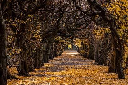 Fall Tree Wallha Lined Path Nature
