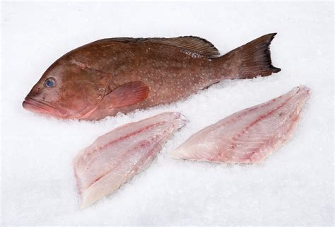 grouper fillet wild fish fresh striped whole mobile bass