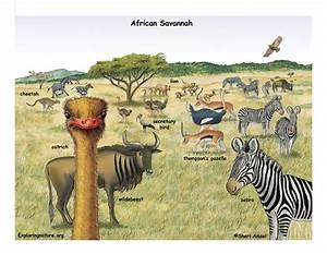 African Grasslands    Ozzy U0026 39 S Preschool Park