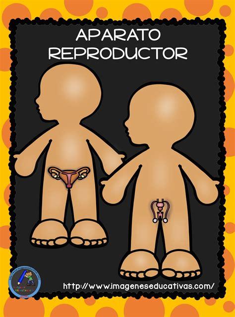 el cuerpo humano aparatos y sistemas para primaria 16