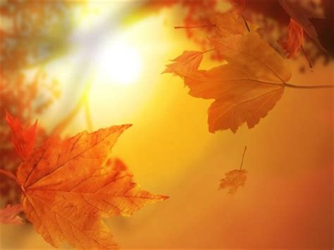 Fall Backgrounds Powerpoint by Autumn Leaves With Sunlight Free Ppt Backgrounds For Your
