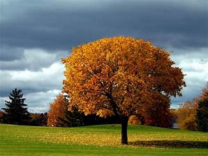 Beautiful Autumn Tree – One HD Wallpaper Pictures ...