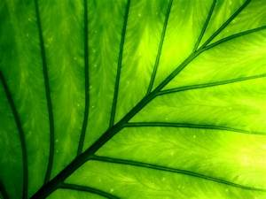 12 Natural green wallpapers of leaves and grass