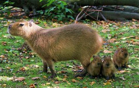 la fauna venezolana imagenes taringa