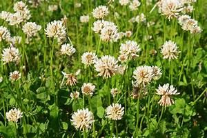 Moos Im Rasen Beseitigen : rasenprobleme in den griff bekommen umweltbundesamt ~ Lizthompson.info Haus und Dekorationen
