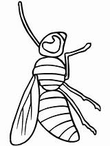 Coloring Pages Insects Primarygames Insect Bug Science Color5 sketch template