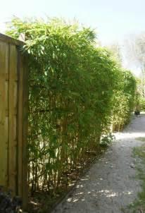 p 233 pini 233 riste et paysagiste les diff 233 rentes fa 231 ons de planter un bambou cr 233 a paysage
