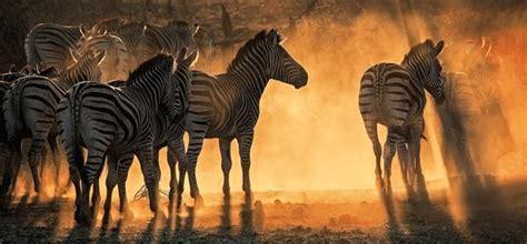 amazing winners   wonders  wildlife