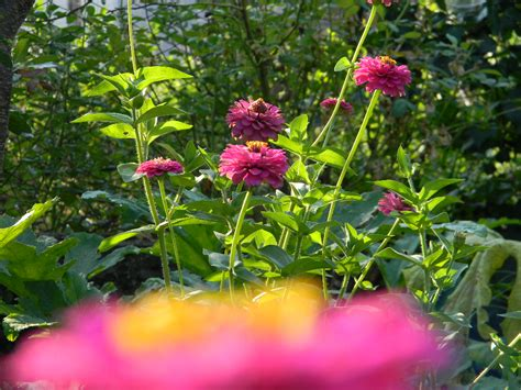 primavera in giardino primavera un viaggio in giardino fiori forchette