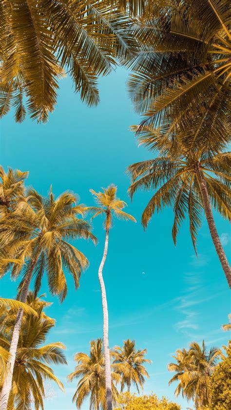 Clear Sky Palm Trees Tropical Fotografia de paisagem