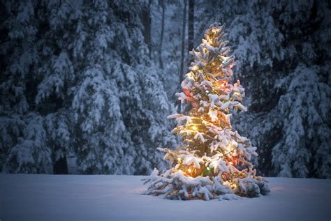 real christmas trees with lights myideasbedroom com