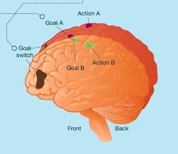 brain  multitasking infographic