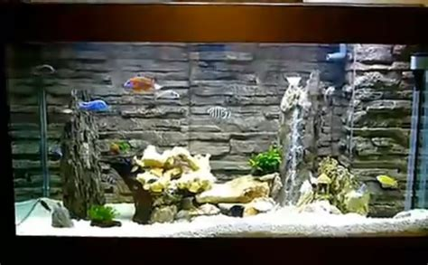 decor de fond aquarium aquarium decorations background 50 ft aquarium