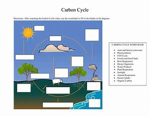Carbon Cycle Blank Diagram
