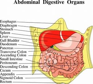 17 Best Images About Referred Pain  Abdominal Quadrants On Pinterest
