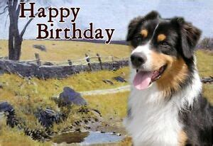 australian shepherd dog  textured birthday card