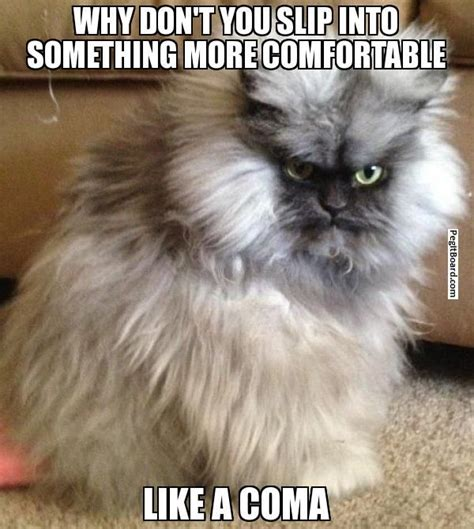 Pissed Off Memes - pissed off cat meme pissed off cat memes pinterest