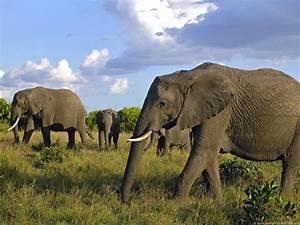 Beautiful African Animals Safaris: Endangered Beautiful ...