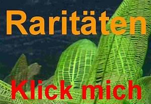 Aquarium Pflanzen Schnellwachsend : star moos starmoos garnelen rarit t aquarium moose ebay ~ Frokenaadalensverden.com Haus und Dekorationen