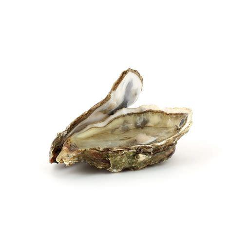 cuisine rapide et pas chere huître poissons et fruits de mer