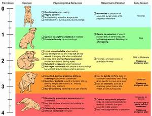Dog Pain Scale Chart  Is Your Dog In Pain Or Possibly Even
