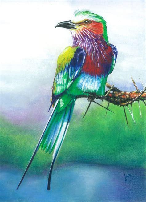 phoenix gabelracke vogel phoenix singvogel von guenter