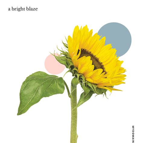 flowers sunflower field edible words jane stephanie bouquets trendiest meals quadrille permission maxted anthology excerpted publishing lewis richard published