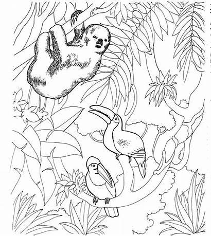 Sloth Coloring Pages Animals Wildlife Habitat