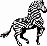 Zebra Coloring Animal sketch template