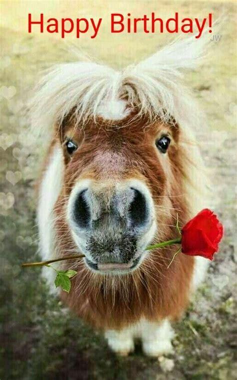 anniversaire cheval heureux anniversaire joyeux