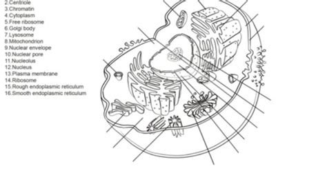 human cell worksheet coloring page science pinterest