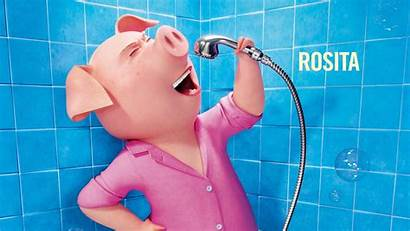 Sing Pig Rosita Animation Movies Wallpapers Moviefone