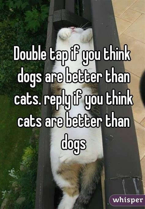 better cats dogs than way wm webimages wimages