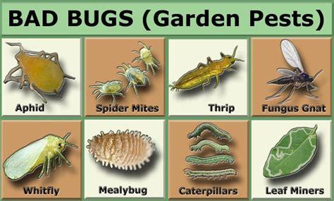 garden pests in the garden gardens charts