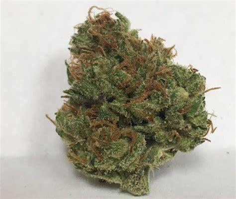 cherry diesel strain information cannafo marijuana