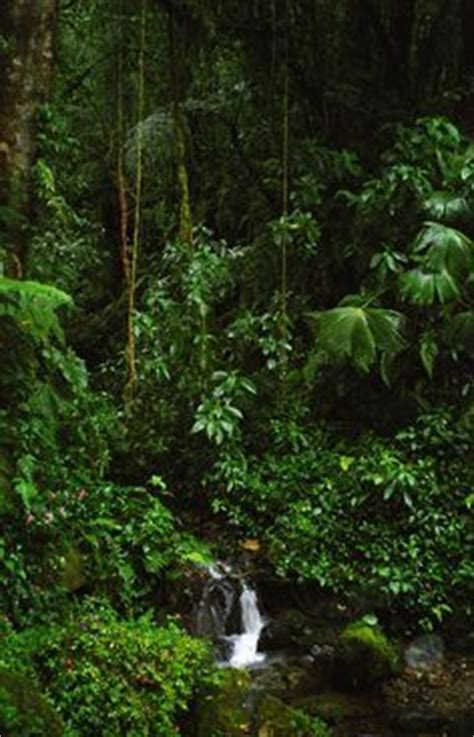1000+ Images About Panama Rainforest On Pinterest Panama