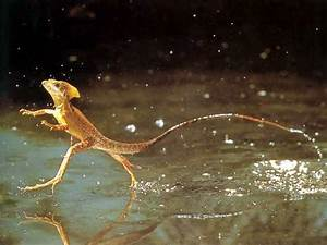 10 Interesting Reptile Facts