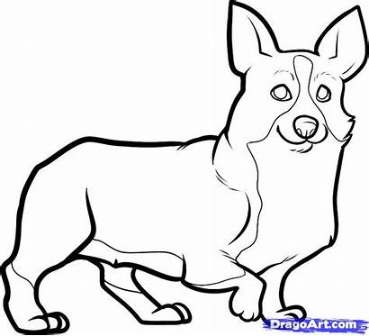 Corgi Draw Drawing Line Clipart Coloring Pages