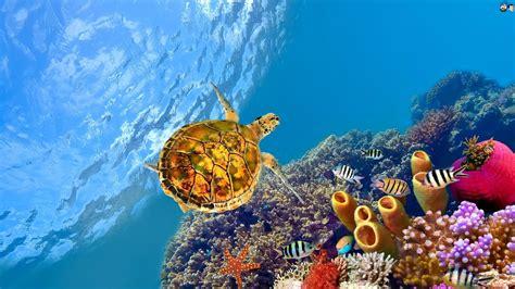 bureau de change disney aquatic hd wallpapers most beautiful places in the