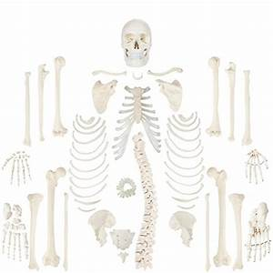 Expert Choice For Bones Anatomy
