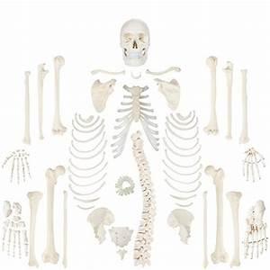 Expert Choice For Bones Anatomy