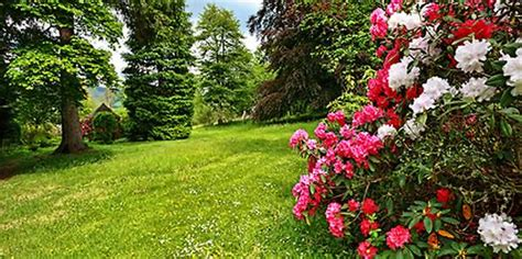 Die Schönsten Pflanzen Für Den Eigenen Garten