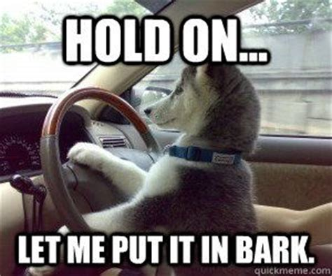 Dog In Car Meme - pinterest the world s catalog of ideas