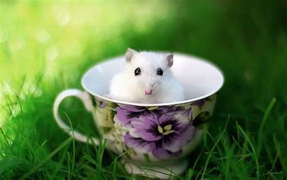Mouse Funny Animals Wallpapers Rat Cup Animal