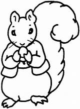 Squirrel Coloring Pages Nut sketch template